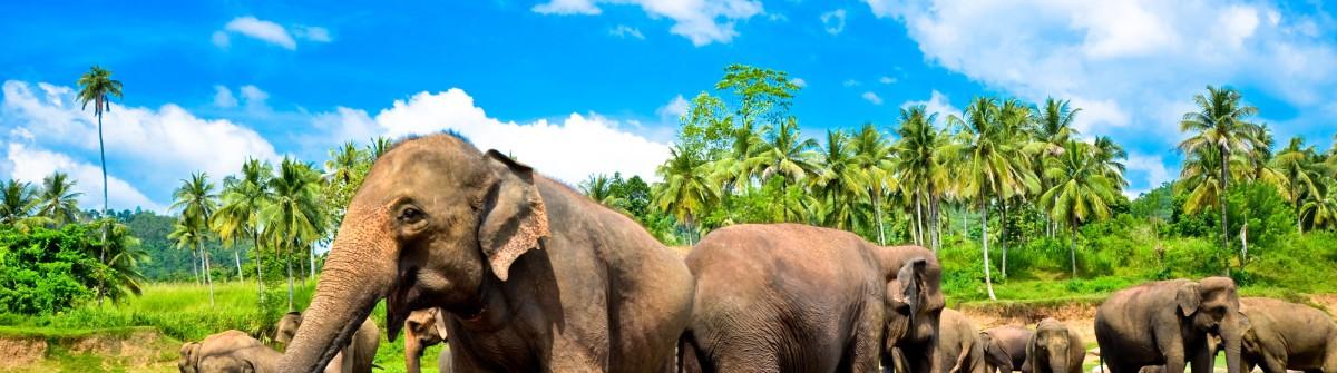 V3_header_Sri Lanka_shutterstock_128294927