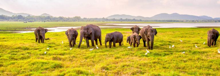 Ferien auf Sri Lanka Elefant