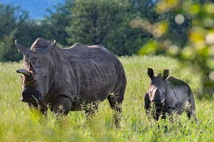 rhino-baby-bamibia-iStock-690401094