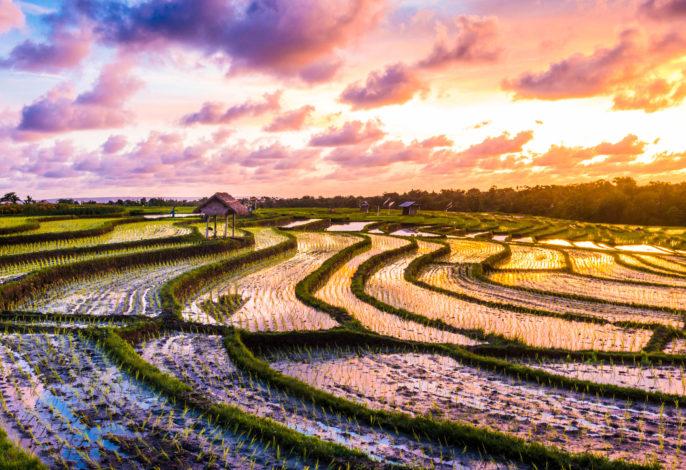 Bali Traumreise Designhotel