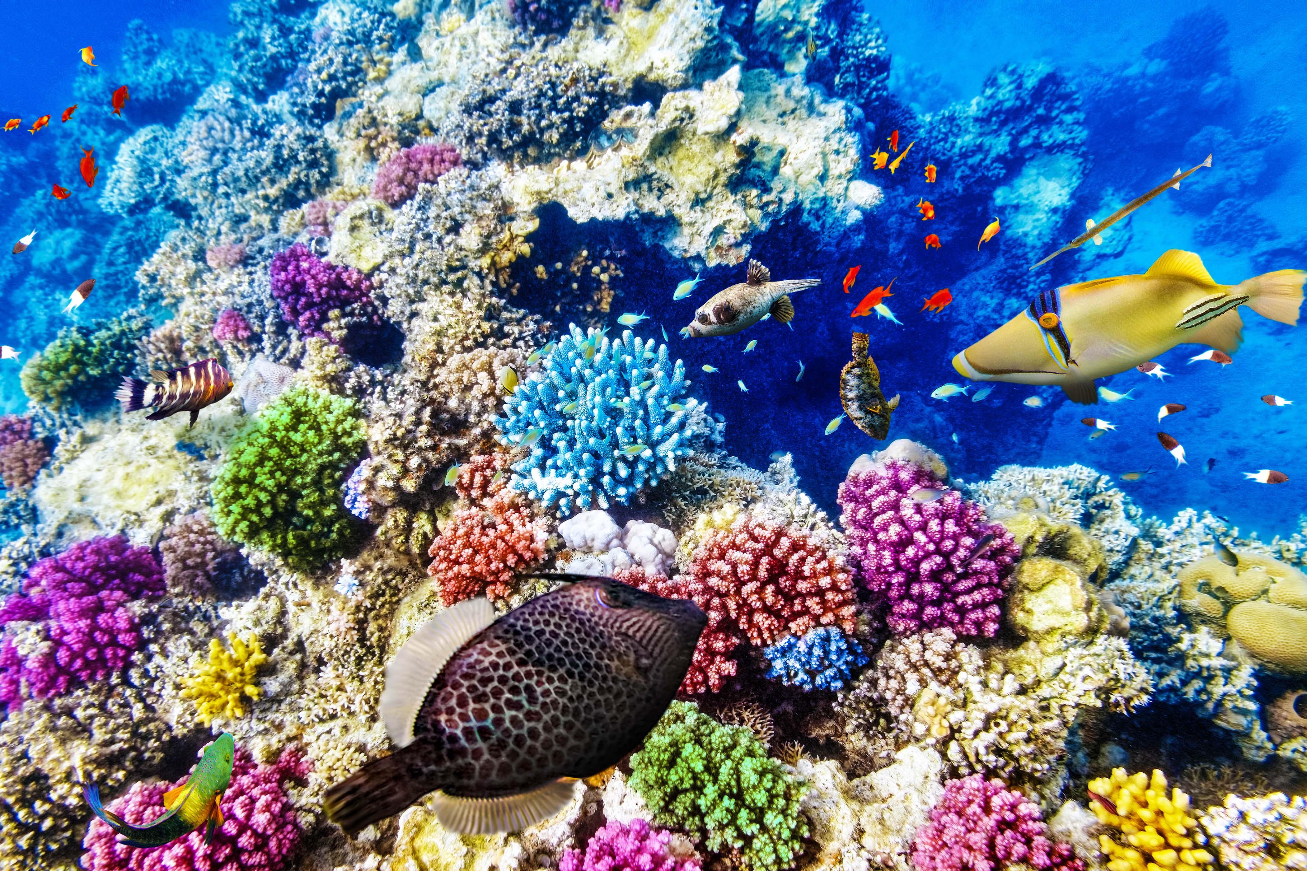 Great Barrier Reef ist für tot erklärt worden   Holidayguru.ch