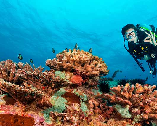 Young-woman-scuba-diver-exploring-sea-bottom-shutterstock_488386945