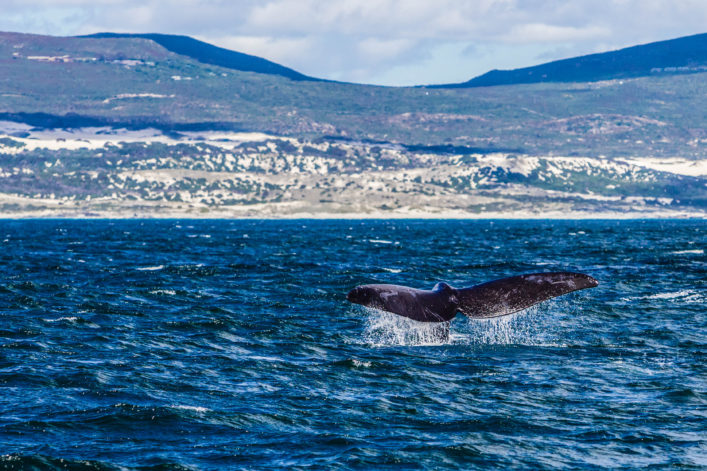 """""""Whale watching in Hermanus, South Africa"""""""