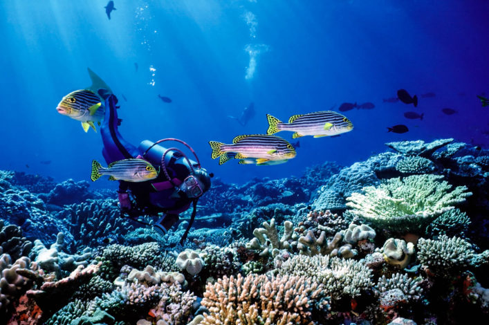 woman-diver-and-south-pacific-fish-istock_549199_medium-2