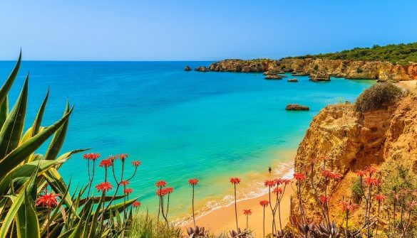 tropical-flowers-on-beautiful-praia-da-rocha-beach-algarve-region-portugal-shutterstock_282116426-2-585×390