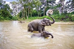 Reiseziele November_Events_Festivals_Elefantenfest Thailand
