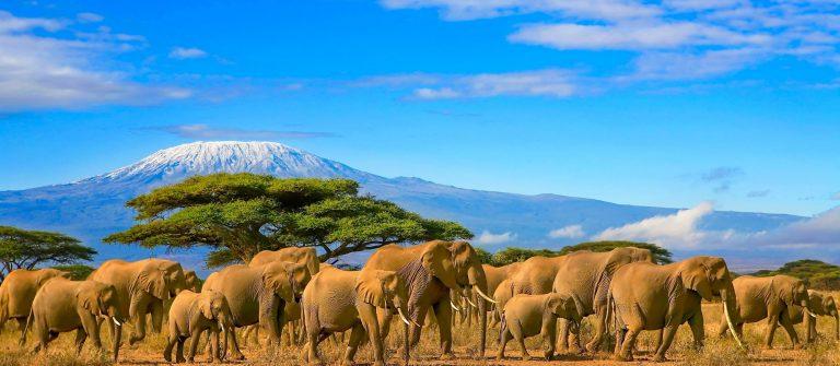 V3_kenia_afrika_shutterstock_678502927