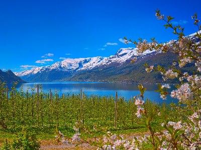 Hardangerfjord-Norwegen-iStock-533696154