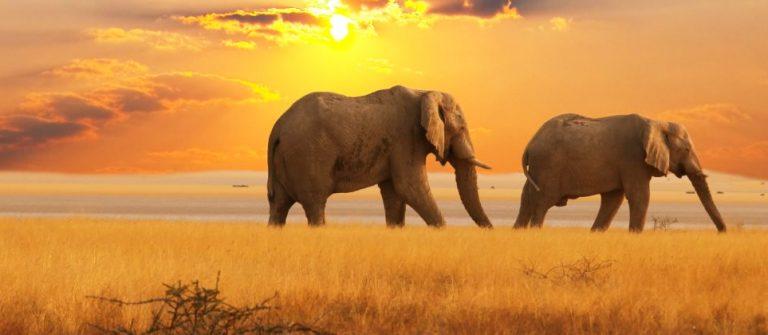Kenia Safari_shutterstock_42499576_Klein