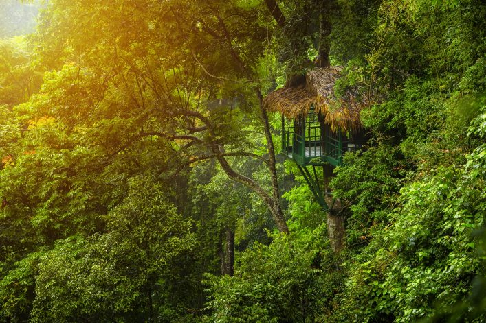Treehouse for nature retreat amidst abundant trees in Laos.