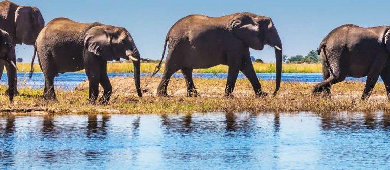 Header Botswana
