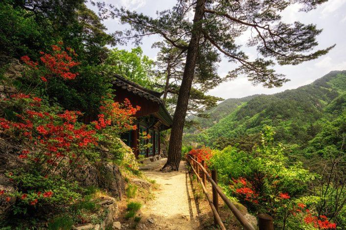 Royal Azalea and Buddhist Shrine