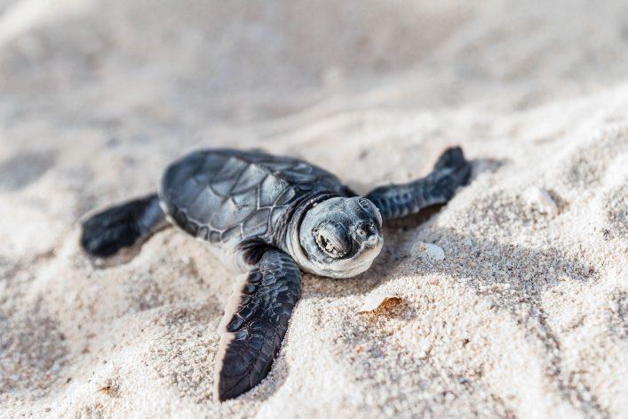 Schildkröten im Sand und Natur in Mexiko