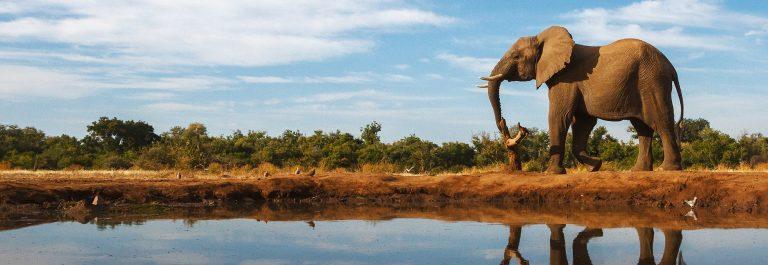 v3-header-elefanten-safari-südafrika-shutterstock_182835713