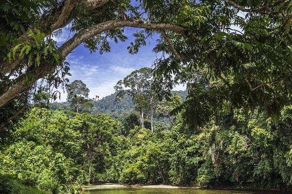 Dschungel in Sumatra