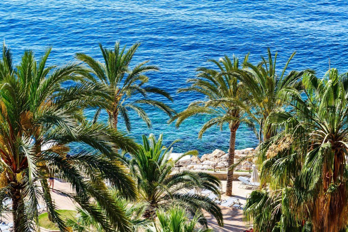 Ein Küstenabschnitt mit Palmen auf Mallorca
