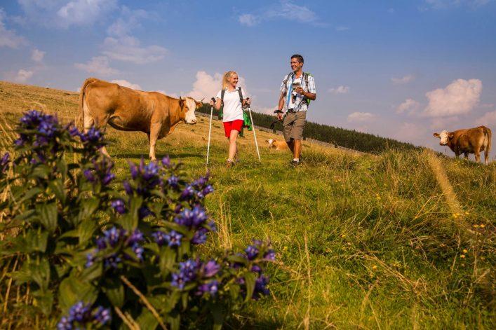 Wandern-auf-der-Alm-c-Oststeiermark-Tourismus-Bernhard-Bergmann-22