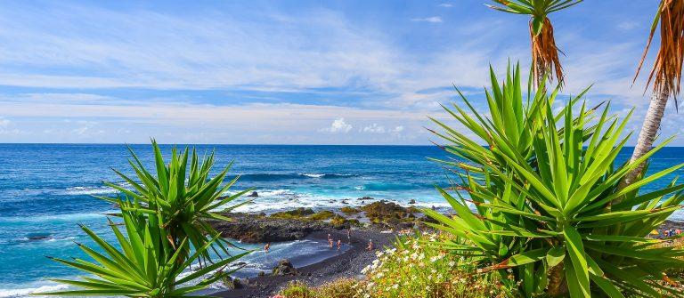 Green-tropical-plants-on-beach-in-Puerto-de-la-Cruz-Tenerife-Canary-Islands-Spain_shutterstock_241485676
