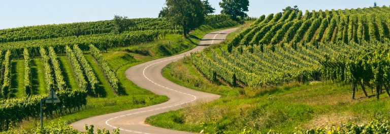 Winding road in the vineyards of Alsace (France)