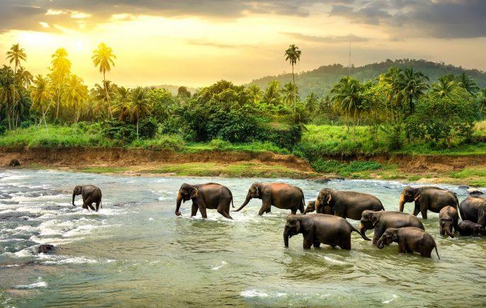 sri-lanka-elephant-washing-asia-sunset-istock_000083566505_large-2
