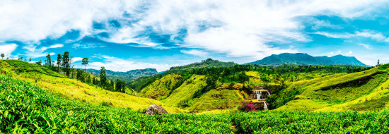 V3_Header_Sri Lanka Fields iStock_000065212315_Large-2