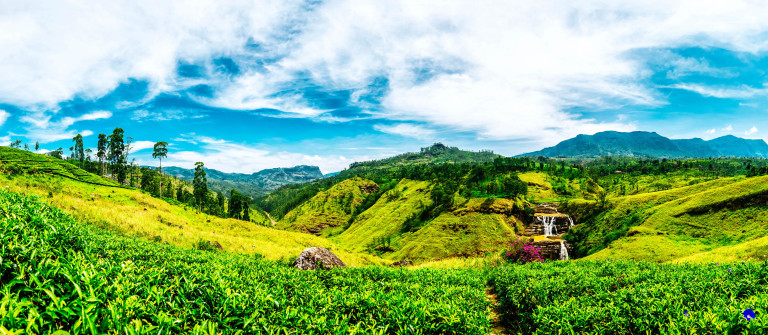 V3_Header_Sri Lanka Fields iStock_000065212315_Large-2