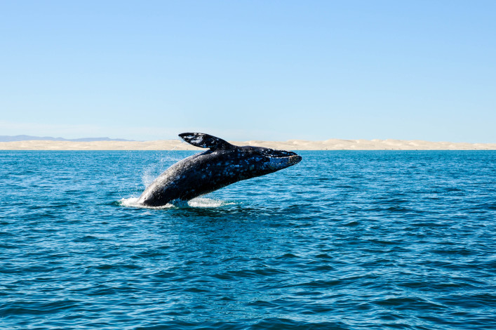 whale whatching tipps