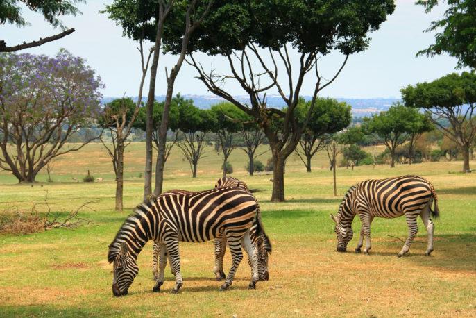 Südafrika Rundreise Safari